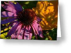 Shadows Of August Greeting Card