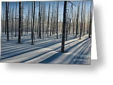 Shadows Of The Forest Greeting Card