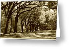Shadows Of The South Greeting Card