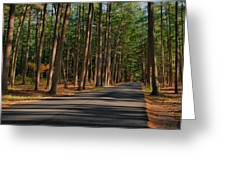 Shadows Road - Ocean County Park Greeting Card