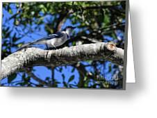 Shadowy Blue Jay Greeting Card