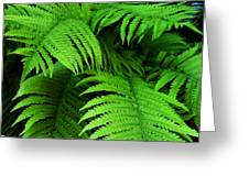 Shadowy Fern Greeting Card