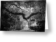 Shadowy Pathway Greeting Card