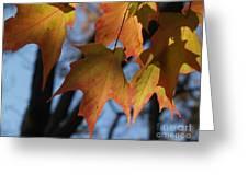 Shadowy Sugar Maple Leaves In Autumn Greeting Card