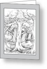 Shady Forest Of Trees Greeting Card