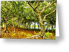Shady Grove At Wai'anapanapa Greeting Card
