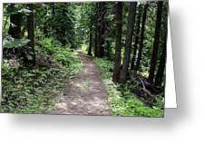 Shady Grove Path Greeting Card