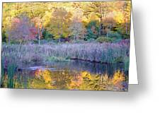 Shady Pond Greeting Card