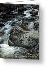 Shady Stream Boulder Greeting Card