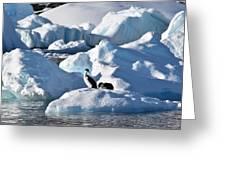 Shag On Ice Greeting Card