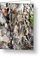 River Birch Greeting Card