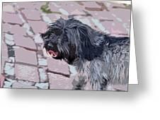 Shaggy Pup Abstract Greeting Card
