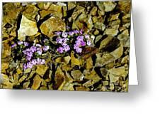 Shale Garden.  Greeting Card