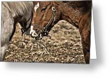 Sharing The Hay Greeting Card