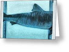 Shark In Magic Cubes - 2 Of 3 Greeting Card