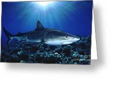 Shark In The Dark Greeting Card
