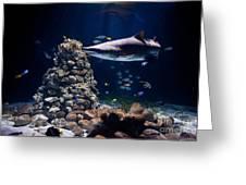 Shark In Zoo Aquarium Greeting Card