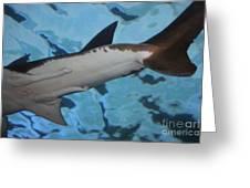 Shark Tail Greeting Card