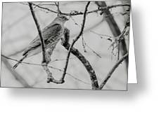 Sharp-shinned Hawk Black And White Greeting Card