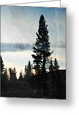 Shasta Trinity National Forest Sunrise Portrait Greeting Card