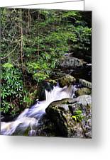 Shays Run Blackwater Falls State Park Greeting Card
