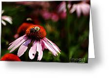 She Loves Bee She Loves Bee Not Greeting Card