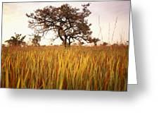Shea Tree In Field, Near Lira, Uganda Greeting Card