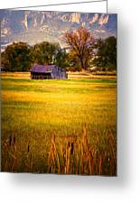 Shed In Sunlight Greeting Card