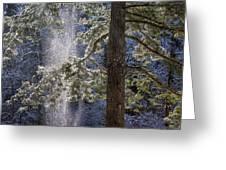 Shedding Snow Greeting Card