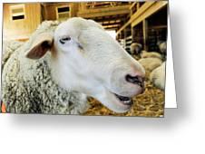 Sheep 2 Greeting Card