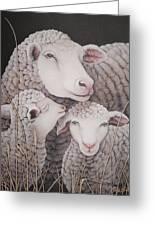 Sheep Ahoy Greeting Card