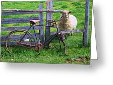 Sheep And Bicycle Greeting Card