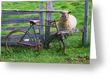 Sheep And Bicycle Greeting Card