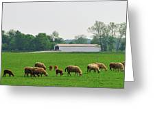 Sheep And Covered Bridge Greeting Card