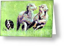 Sheep And Dog Greeting Card