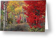 Sheep Canyon In Autumn Greeting Card