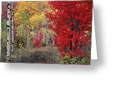 Sheep Canyon In Autumn Greeting Card
