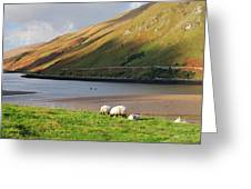Sheep Grazing In Connemara Ireland Greeting Card
