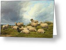 Sheep In A Pasture Greeting Card