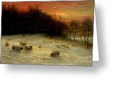 Sheep In A Winter Landscape Evening Greeting Card