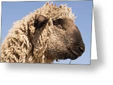 Sheep In Profile Greeting Card