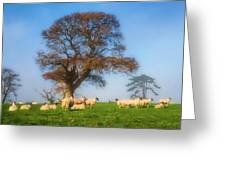 Sheep In Somerset - Impressions Greeting Card