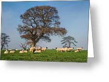Sheep In Somerset Greeting Card