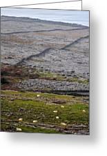 Sheep In The Burren Ireland Greeting Card