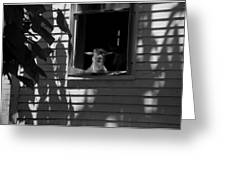 Sheep In The Shadows Greeting Card