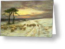 Sheep In The Snow Greeting Card