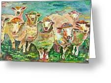 Sheep Marketing Board Greeting Card