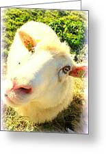 So Sheep Of You To Leave Me Here  Greeting Card
