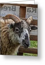 Sheep One Greeting Card