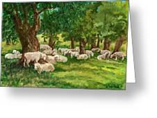 Sheep Pasture Ithaca New York Greeting Card by Ethel Vrana